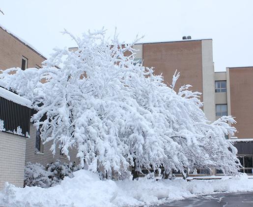 Snow-Storm-2-March-2018